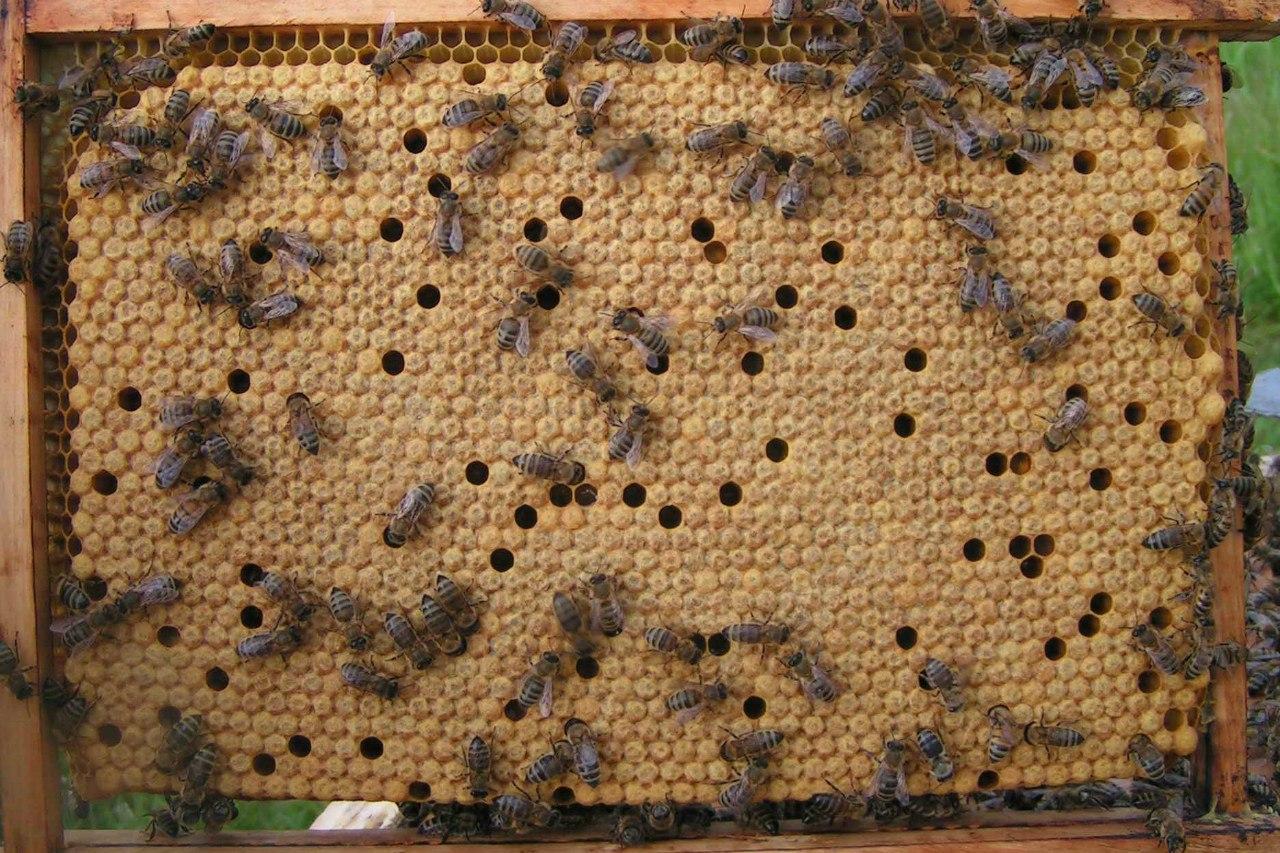 Лечение укусами пчел в домашних условиях, отзыв на 3